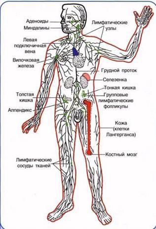 Органы, ткани и клетки